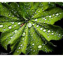 rain drops Photographic Print