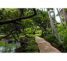 Hawaii Tranquil Tree Garden Photographic Print