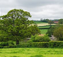 Stockland ~ Devon by Susie Peek