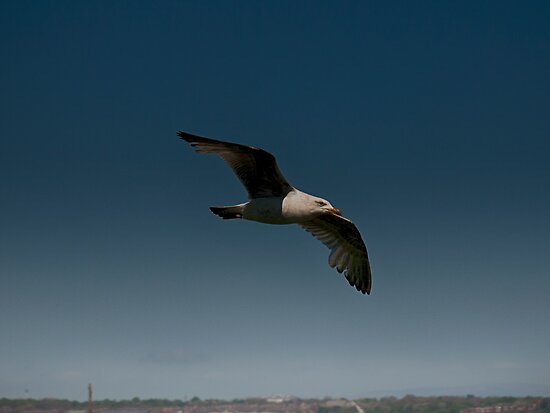 Gull Over the Town by Glen Allen