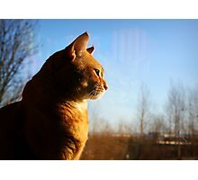 Cat Window Portrait Photographic Print