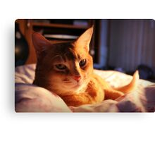 Cute Cat Canvas Print