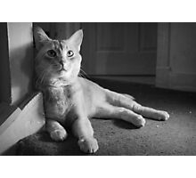 Cat Portrait Photographic Print