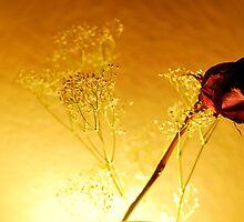 Romance by Gail Fletcher