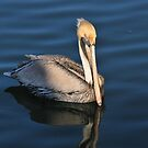 Pelican by Kate Adams