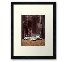 White Dingo Framed Print