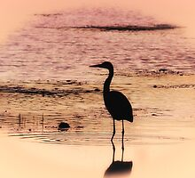 Heron At Twilight by Sharon Woerner