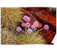Mulla mulla Wildflower - Pilbara Western Australia Poster