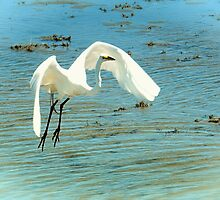 White Crane In Flight by Sharon Woerner