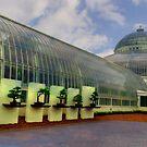Como Conservatory's Bonsais by shutterbug2010