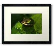 Tree Frog - Sunshine Coast Framed Print