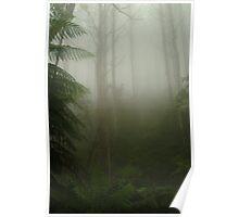 Joe Mortelliti Gallery - Green mist on the Black Spur, near Marysville, Victoria, Australia. Poster