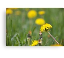 Bright sparks Canvas Print
