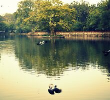 Frighten Birds by Sahil  Gogia