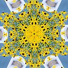 Black eyed Susan 2 by Tori Snow
