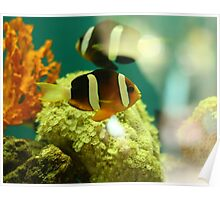 Sea Creatures (1) Poster