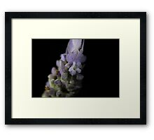 Floret on a Flower Framed Print
