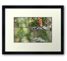 Barb Wire... Framed Print