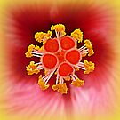 Hibiscus closeup by ©The Creative  Minds