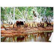 Fortescue River, Western Australia Poster