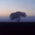 243/365 one tree alone in the mist at dawn by LouJay