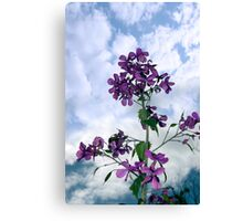 may flowers growing in the wild Canvas Print