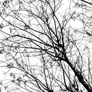 Branches by Apostolos Mantzouranis