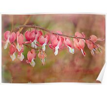 dramatic dicentra Poster
