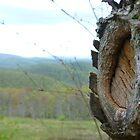Knothole on Alleghany Mountain by Chad Burrall