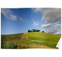 Vineyards in Tuscany Poster