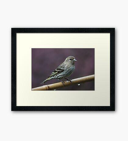 Bird on Bamboo #2 Framed Print