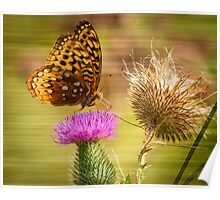 Fritillary On Thistle 2013-1 Poster