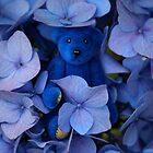 Blue Bear's playing Hide and Seek. by Kerry McQuaid