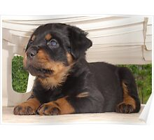 Cute Faced Rottweiler Puppy Side View Poster