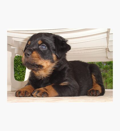 Cute Faced Rottweiler Puppy Side View Photographic Print