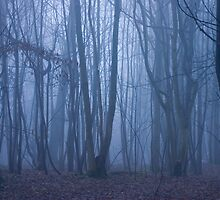Night Forrest by BeautyInNature