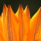 springy orange by yvesrossetti