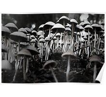 fungal fantasy Poster