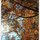 autumn by kippis