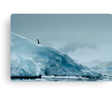 Lone Penguin on Ice Canvas Print