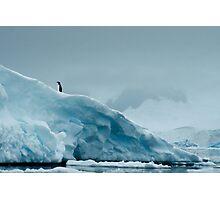 Lone Penguin on Ice Photographic Print