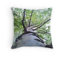 Birch tree Throw Pillow