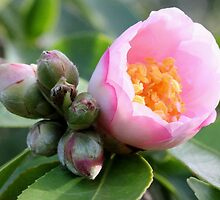Burst of Buds by LeJour