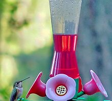 Hummingbird at Feeder by AnnDixon