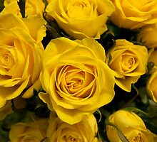 Yellow Roses by MrsGJ