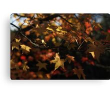 Glowing Autumn Leaves Canvas Print