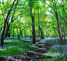 In bluebell heaven by Paula Oakley