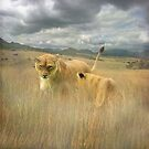 """""""Wild Africa"""" by peaky40"""