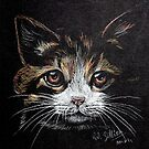 Kitten by Robert David Gellion
