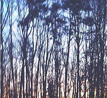 Sunrise/Sunset Woods by azaky